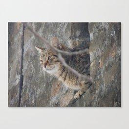 Cat view Canvas Print