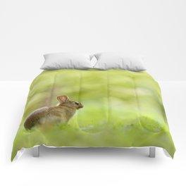 The Happy Rabbit Comforters