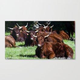 Brown cows Canvas Print