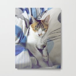 Getting Comfy Metal Print