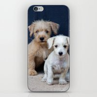 puppies iPhone & iPod Skins featuring Puppies by Rafael Andres Badell Grau