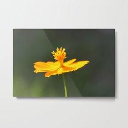Flower or Sundial? Metal Print