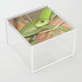 Green viper Acrylic Box