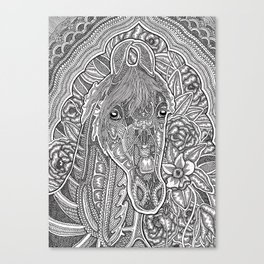 Marwari Horse Canvas Print