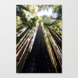 The Great Altar of the Church of the Redwood Forest Canvas Print