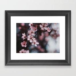 Blossom II Framed Art Print