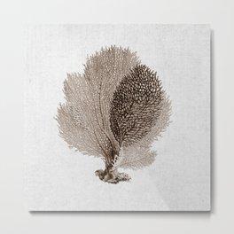 Brown Sea Fan Coral Illustration Nautical Decor Metal Print