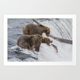 The Catch - Brown Bear vs. Salmon Art Print
