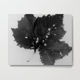 Sycamore Leaf Lumen Print Metal Print