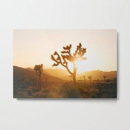 Joshua Tree II Metal Print