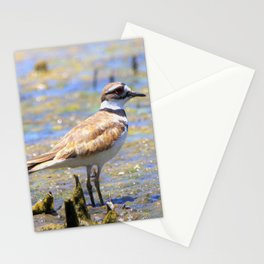 Killdeer in the Marsh by Reay of Light Stationery Cards