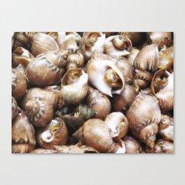 texture of sea snails Canvas Print