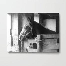 In the Stables Metal Print