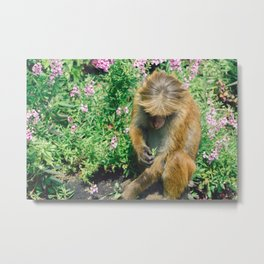 Monkey at the Royal Botanical Garden, Kandy, Sri Lanka Metal Print