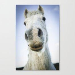 Horse lips Canvas Print