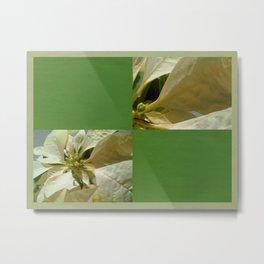 Pale Yellow Poinsettia 1 Blank Q5F0 Metal Print