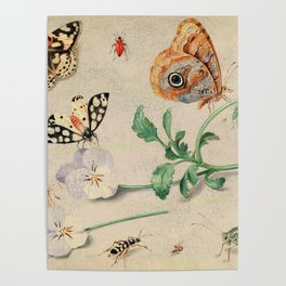 """Jan van Kessel de Oude """"Study of insects and flowers"""" Poster"""