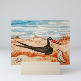 Black Skimmer and Chick  Mini Art Print