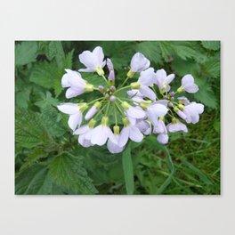little purple flowers Canvas Print