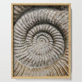 Ammonite Spiral Fossil Serving Tray