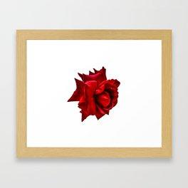 Vibrant Rose Framed Art Print