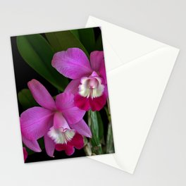 Laeliocattleya Orchid Stationery Cards