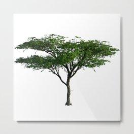 Acacia Tree Metal Print