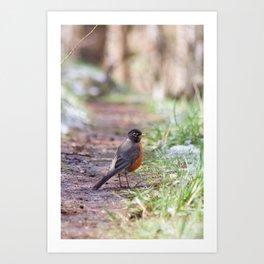Robin in the Path Art Print
