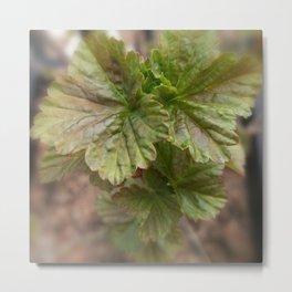 Currant Spring Leaves Metal Print