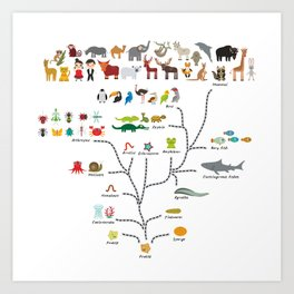 Evolution scale from unicellular organism to mammals. Evolution in biology, scheme evolution Art Print