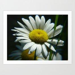 #406 flower bug and sun house bitterroot mt macro Art Print