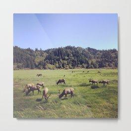 Elk Reserve Metal Print