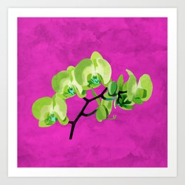 Orchid flower, green Art Print
