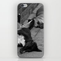 greek iPhone & iPod Skins featuring Greek Dogs by Upperleft Studios
