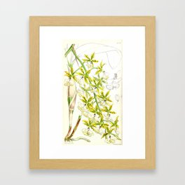 A orchid plant - Vintage illustration Framed Art Print