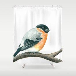 Bullfinch bird Shower Curtain