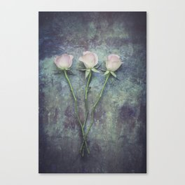 Three Roses II Canvas Print