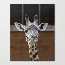 The Giraffe Canvas Print