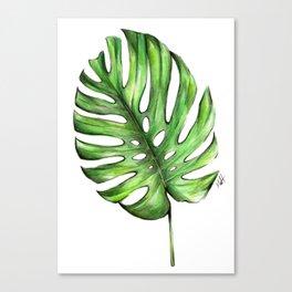 Monstera green leaves Canvas Print