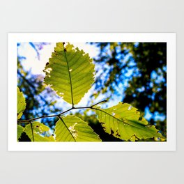 End of Summer Leaves Art Print