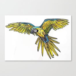 Blue Macaw Canvas Print