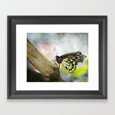 The Stillness of a Butterfly Framed Art Print