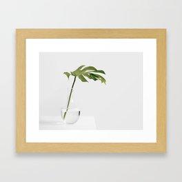 Single Monstera Leaf In Clear Glass Zen Minimalist House Plant Photo Framed Art Print