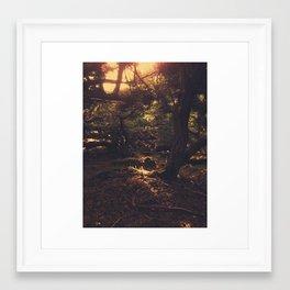 Sunlit Forest Framed Art Print