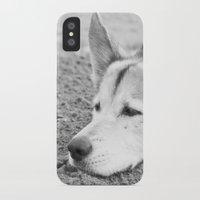 husky iPhone & iPod Cases featuring husky by MrBdigital