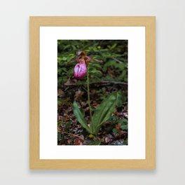 Wild Lady Slipper Flower Framed Art Print