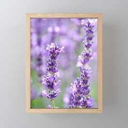 lavender Framed Mini Art Print