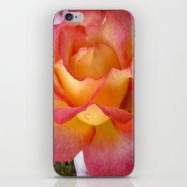 Dew Drop Fire Rose, 2012 iPhone Skin