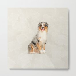 Australian Shepherd - Blue Merle Watercolor Digital Art Metal Print