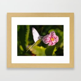 White butterfly on a plant in nature Framed Art Print